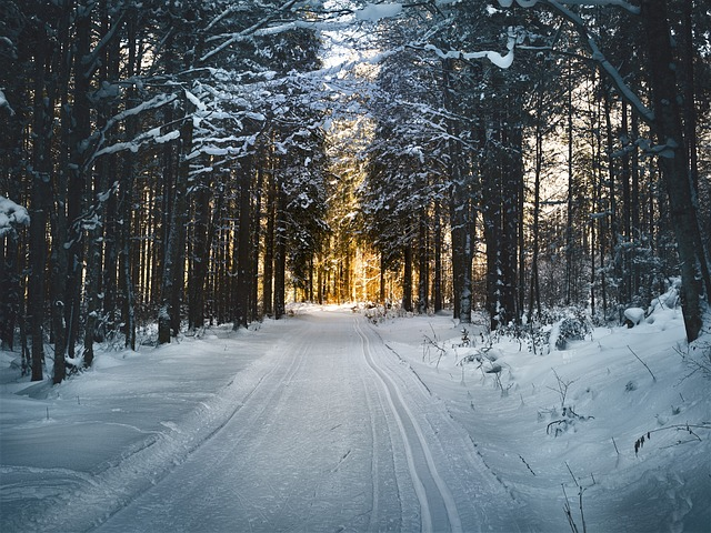ślady nart w lesie